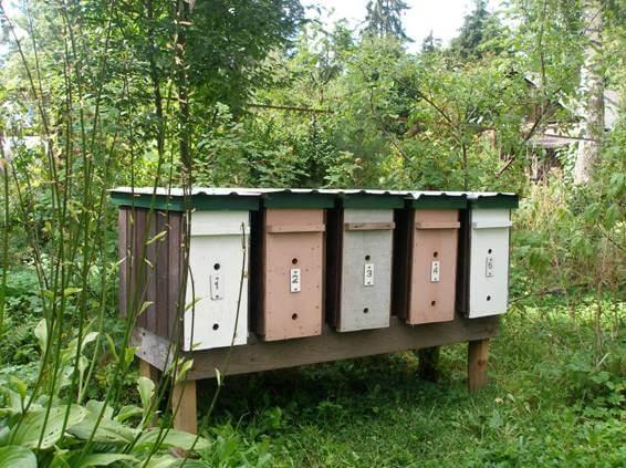 Пчеловождение в двухкорпусном улье— особенности двухматочного содержания