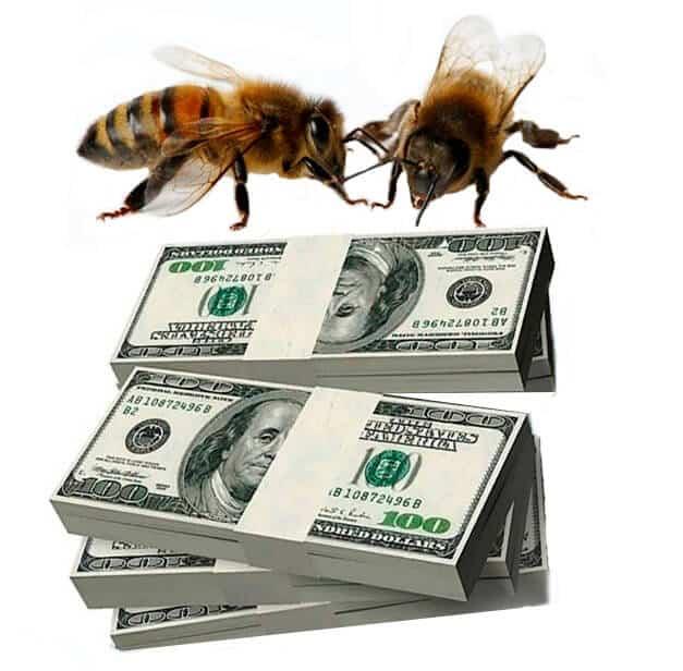 Доход от пчеловодства: сколько прибыли можно получить от пчел, окупаемость пасеки