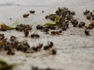 Гибель пчел осенью