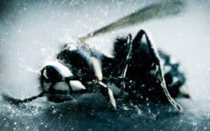 Пчела в дождь