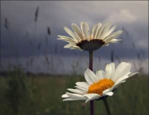 Непогода - одна из причин роения