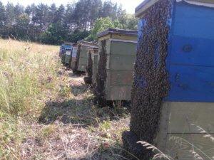 Так пчелы ведут себя в жару