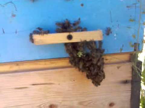 Что делать, когда пчелам жарко?