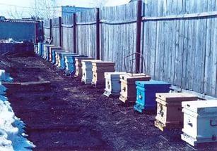Какой забор для защиты от пчел необходим на пасеке?