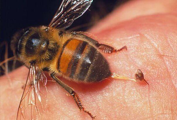 Антигистаминное от укуса пчел